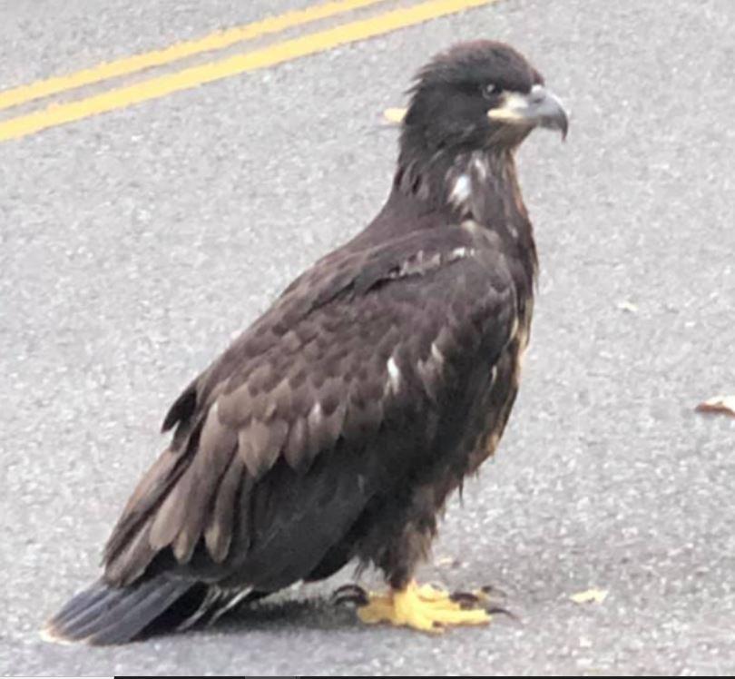 Eagle Nest Cam
